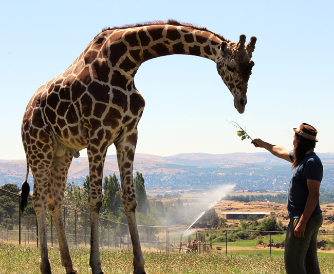 Jason and giraffe